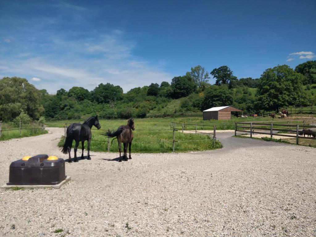 entrée du paddock Paradise avec chevaux