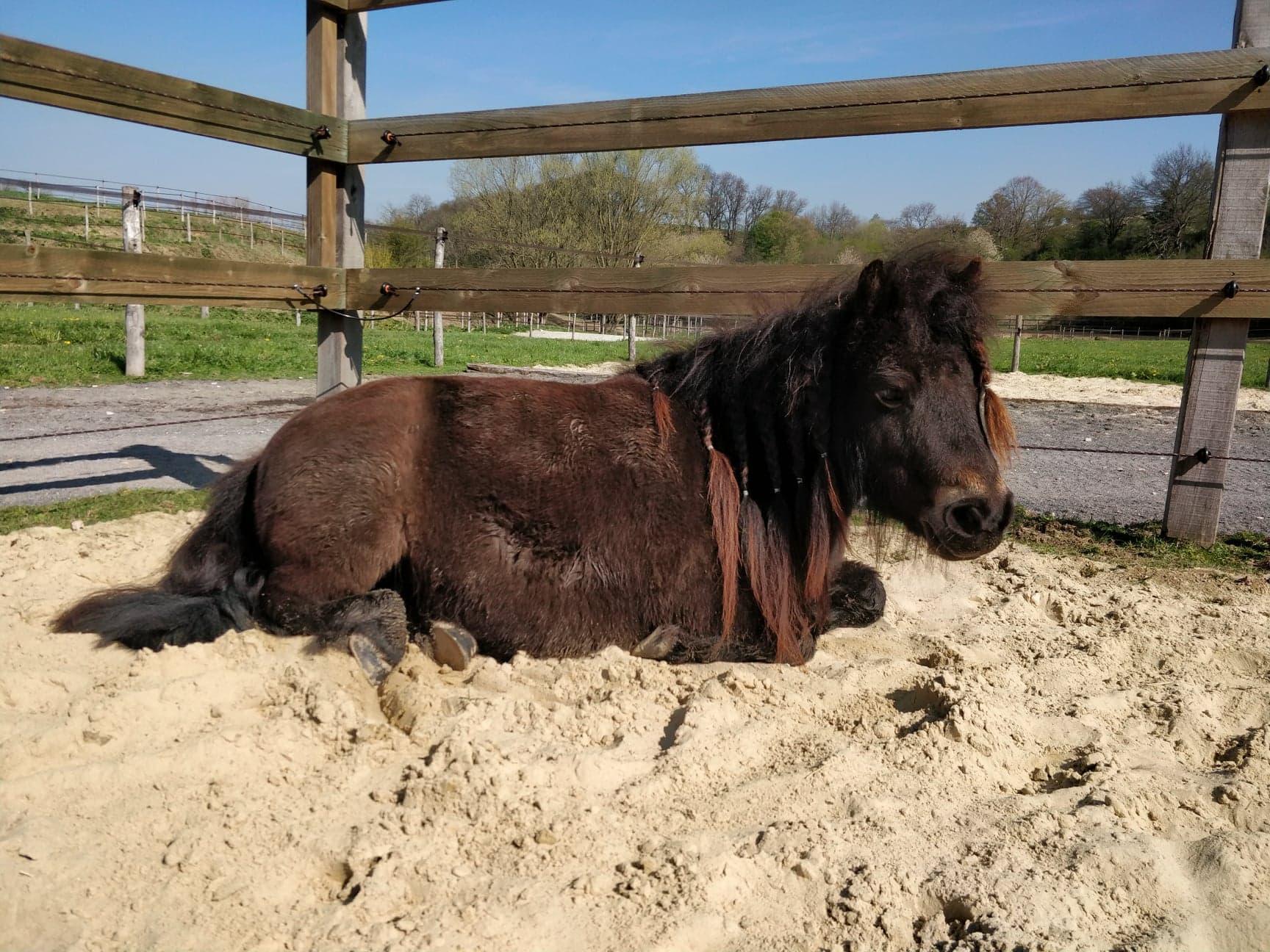 Zone sable du paddock poneys
