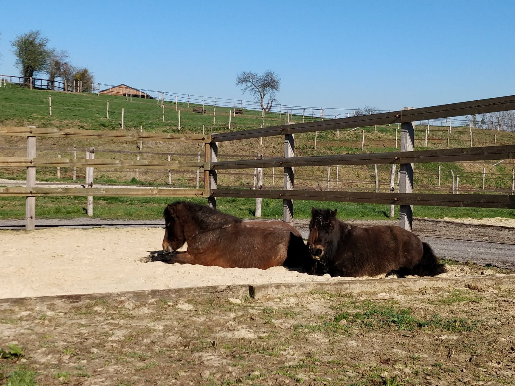 Zone sable du paddock poney