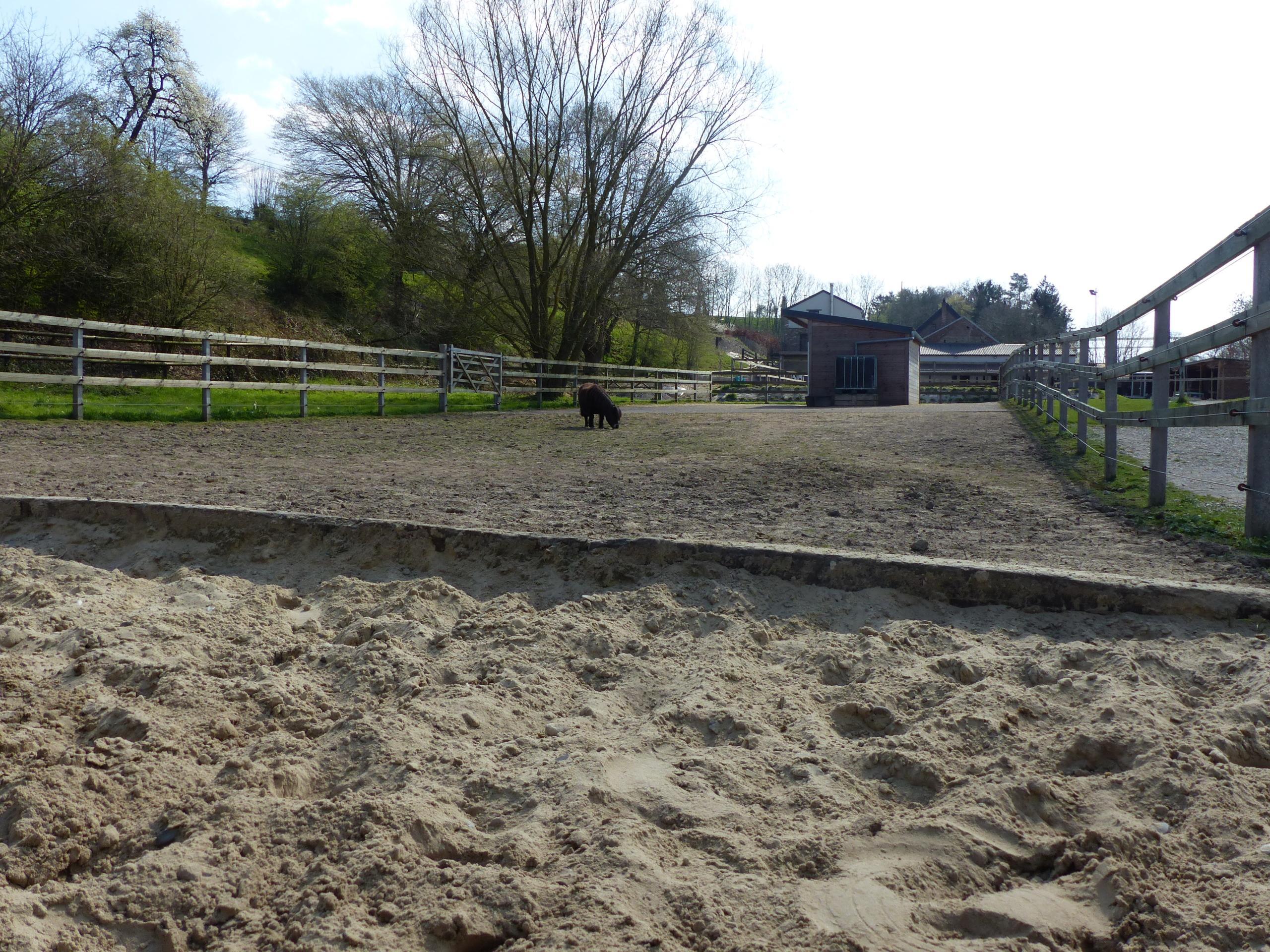 sable paddock poney